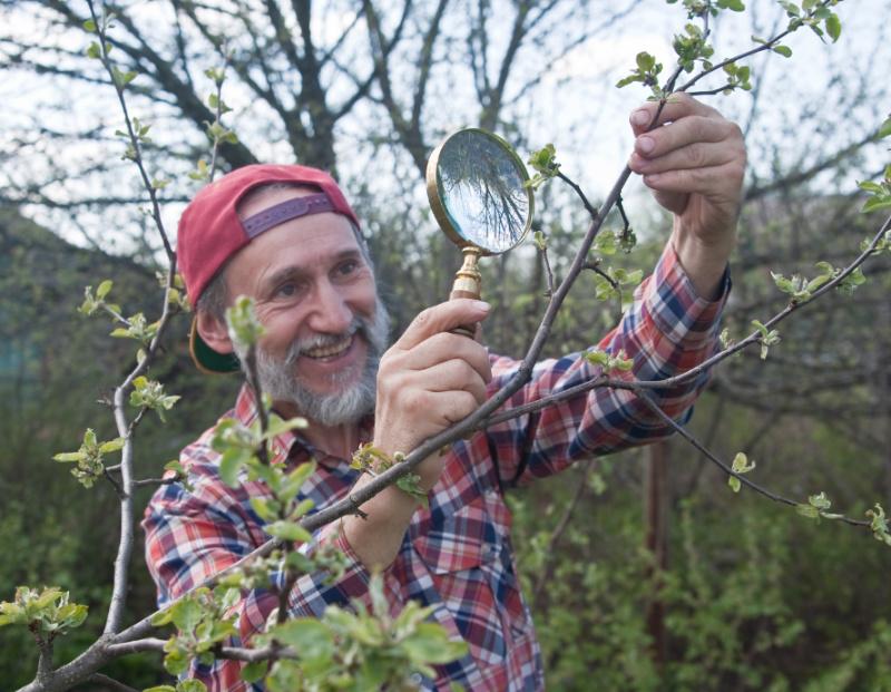 Садовод-эксперт: «Крутятся листья на яблоне и груше? Я знаю почему!»