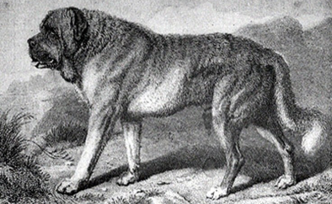 Породы собак, которые исчезли навсегда