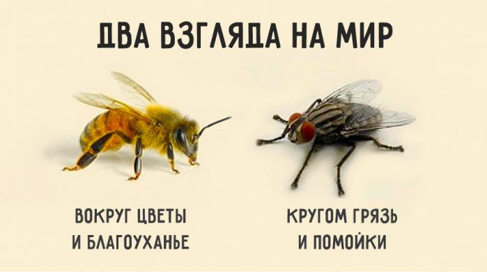 Картинки по запроÑу Притча о пчеле и мухе