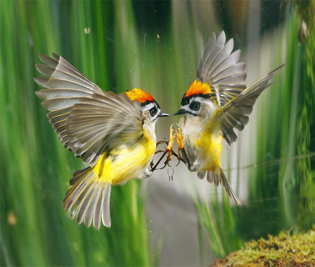 Полный отлет! Сказочные снимки птиц