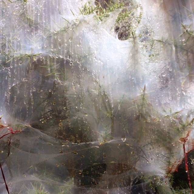 Гусеницы превратили город в декорации фильма ужасов британия, в мире, гусеницы, красота, лес, природа