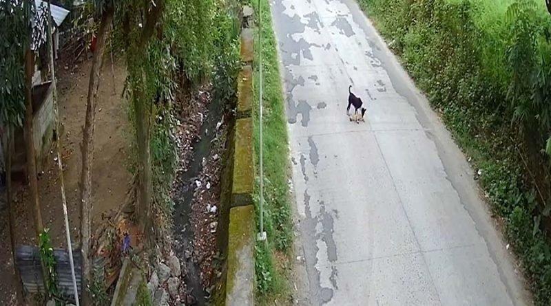 Убитая горем собака пытается воскресить своего друга после того, как тот попал под колёса автомобиля видео, горе, животные, милота, помощь, собака