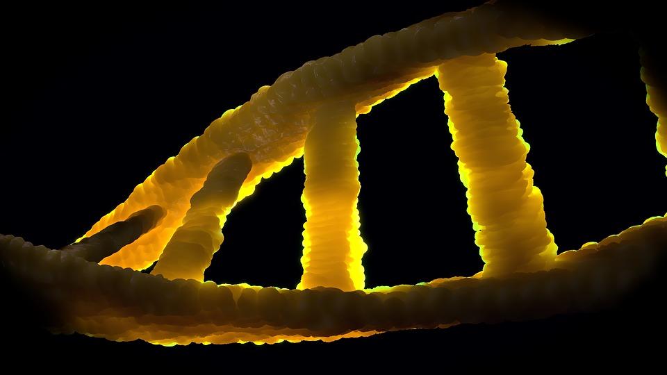 ДНК.jpg