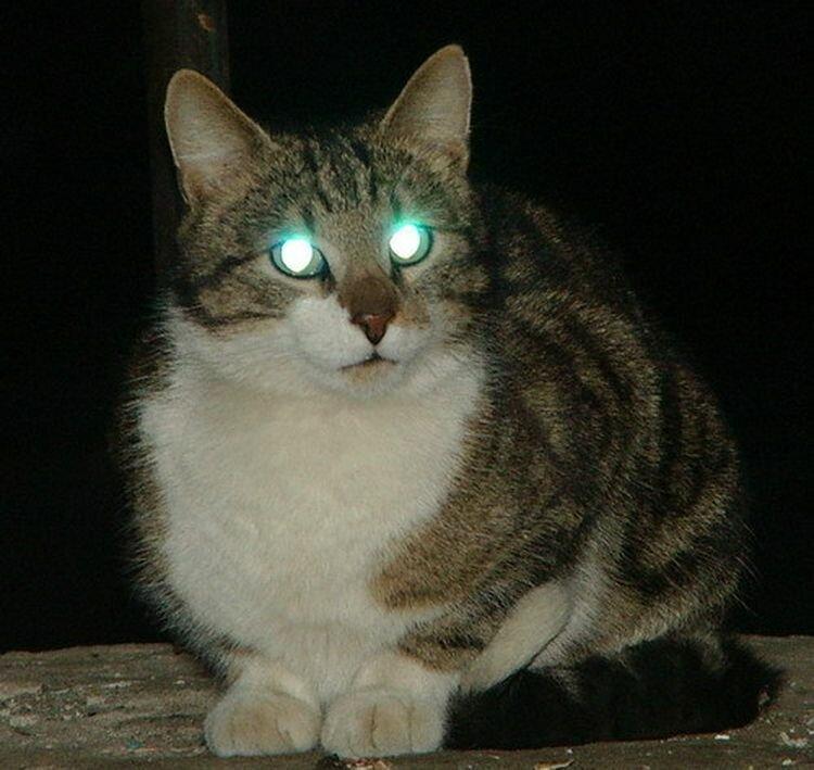 у кошки светятся глаза картинки обычно видеть нельзя
