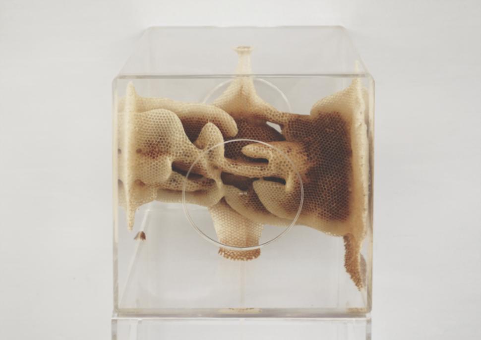 Восковые карты японского пчеловода  воск, карта, пчела, скульптура