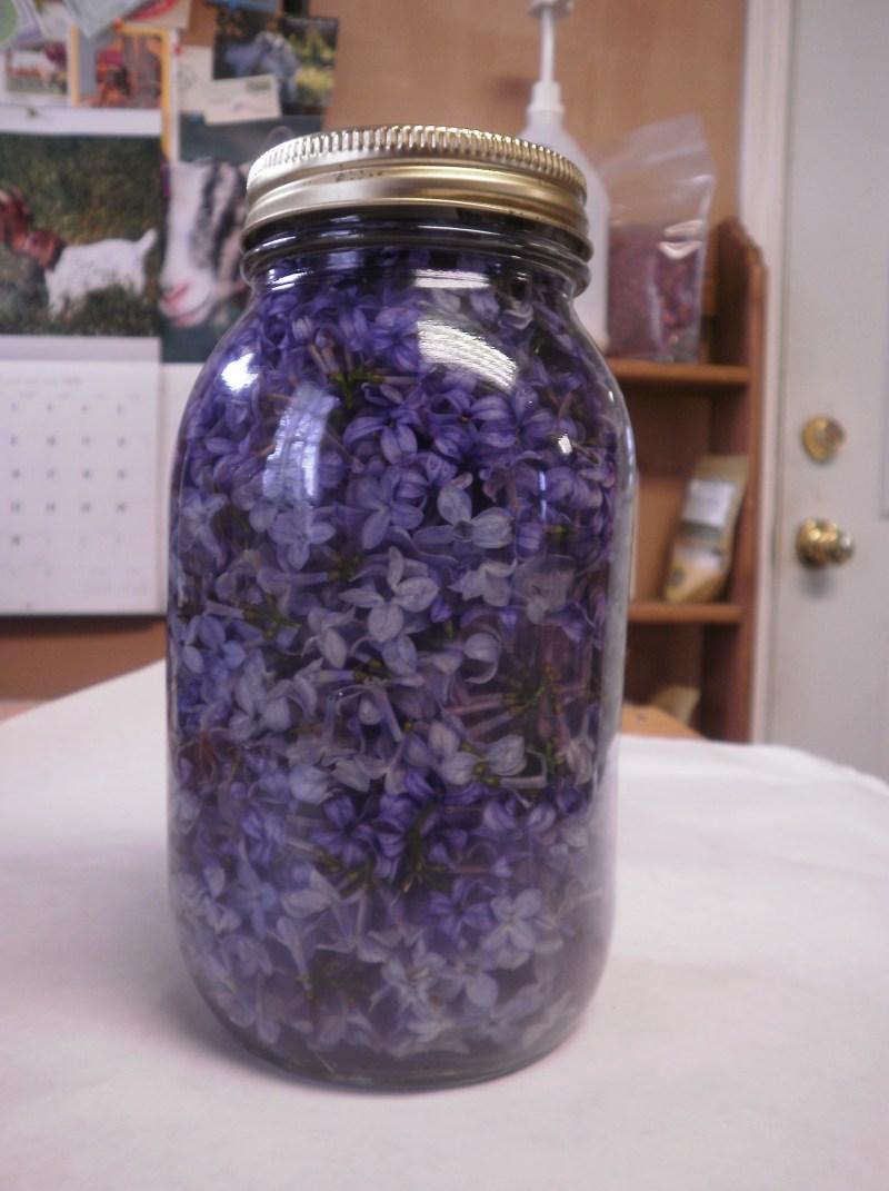 Успейте в самый пик цветения: заполните емкость растительным маслом и фиолетовыми цветками