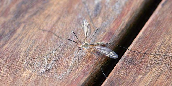 кол-во комаров в мире
