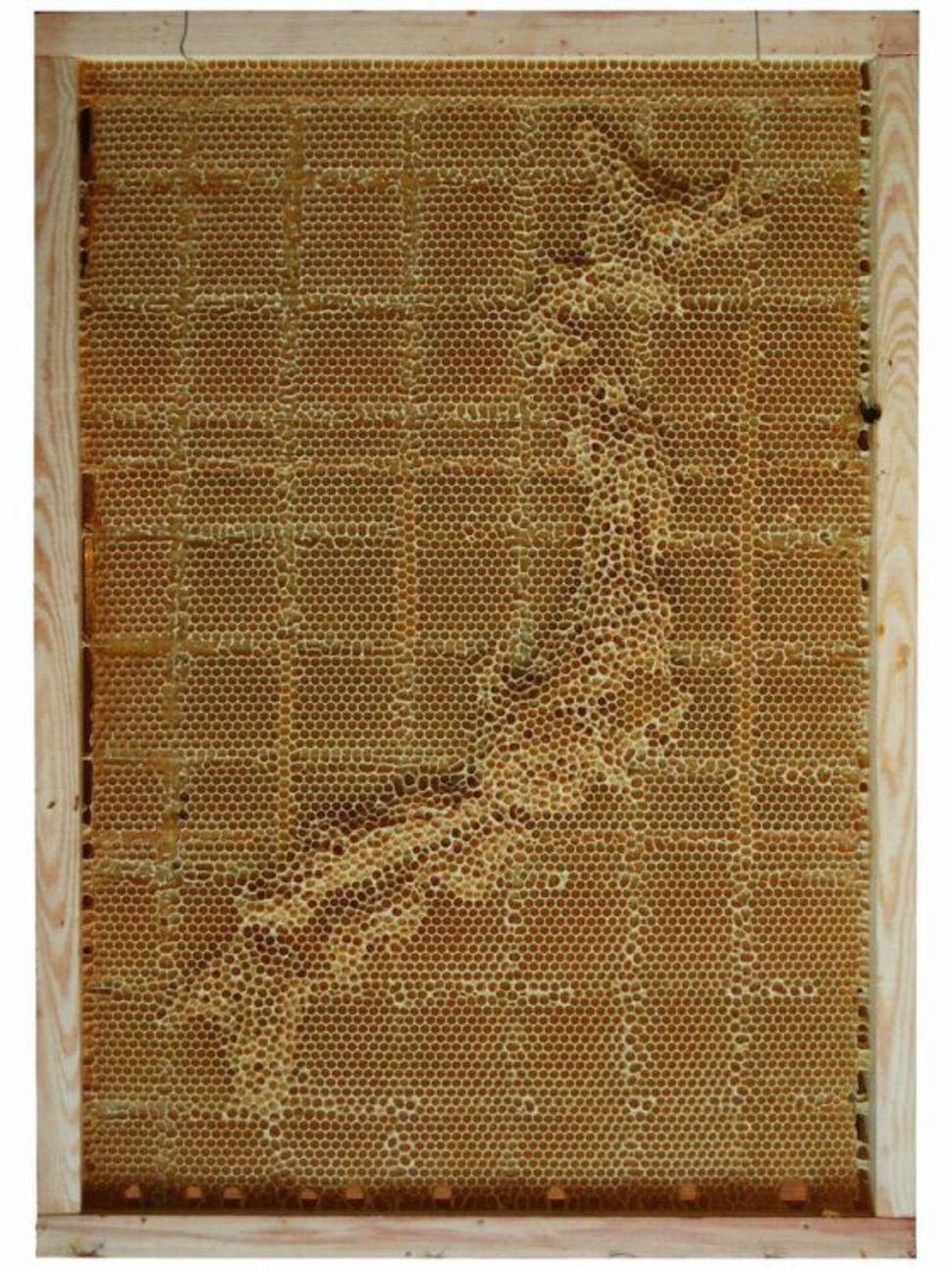Япония воск, карта, пчела, скульптура