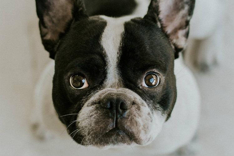 Щенячий взгляд: почему собаки точно знают, что делают