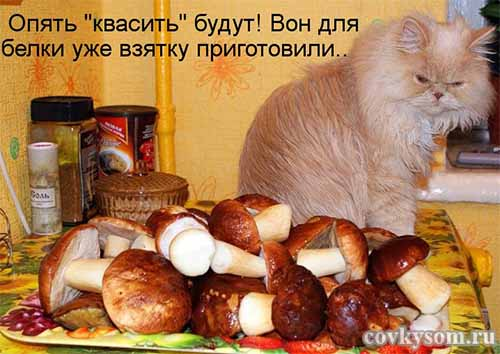 Кулинарные котоматрицы 35 (юмор)