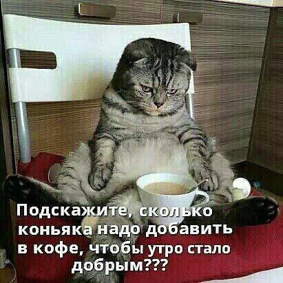 Решил искупать кота... заодно и сам помылся анекдоты