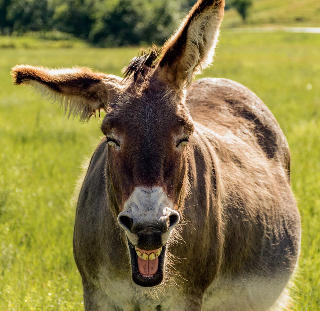 картинки смеются животные человека мучали