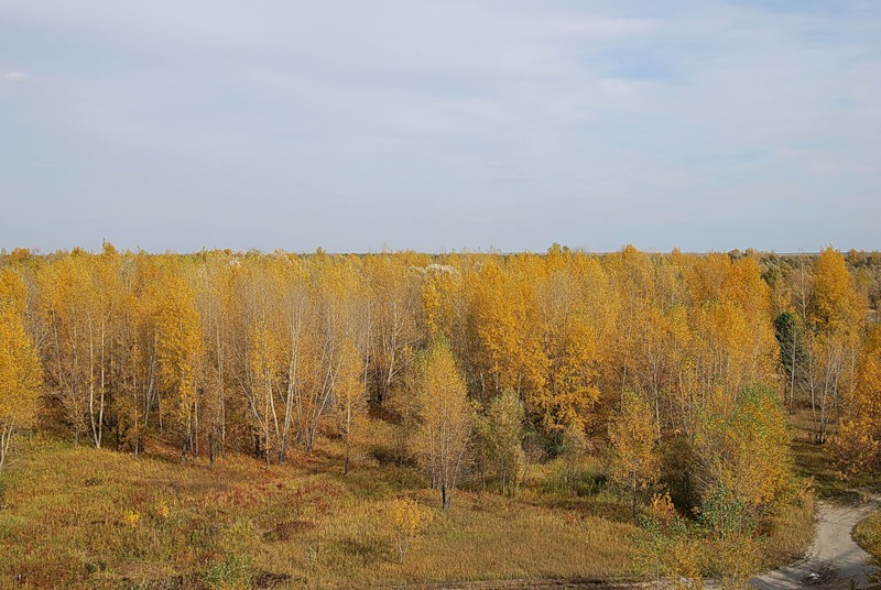 Затеряться в осеннем лесу(Теплякова Наталья)