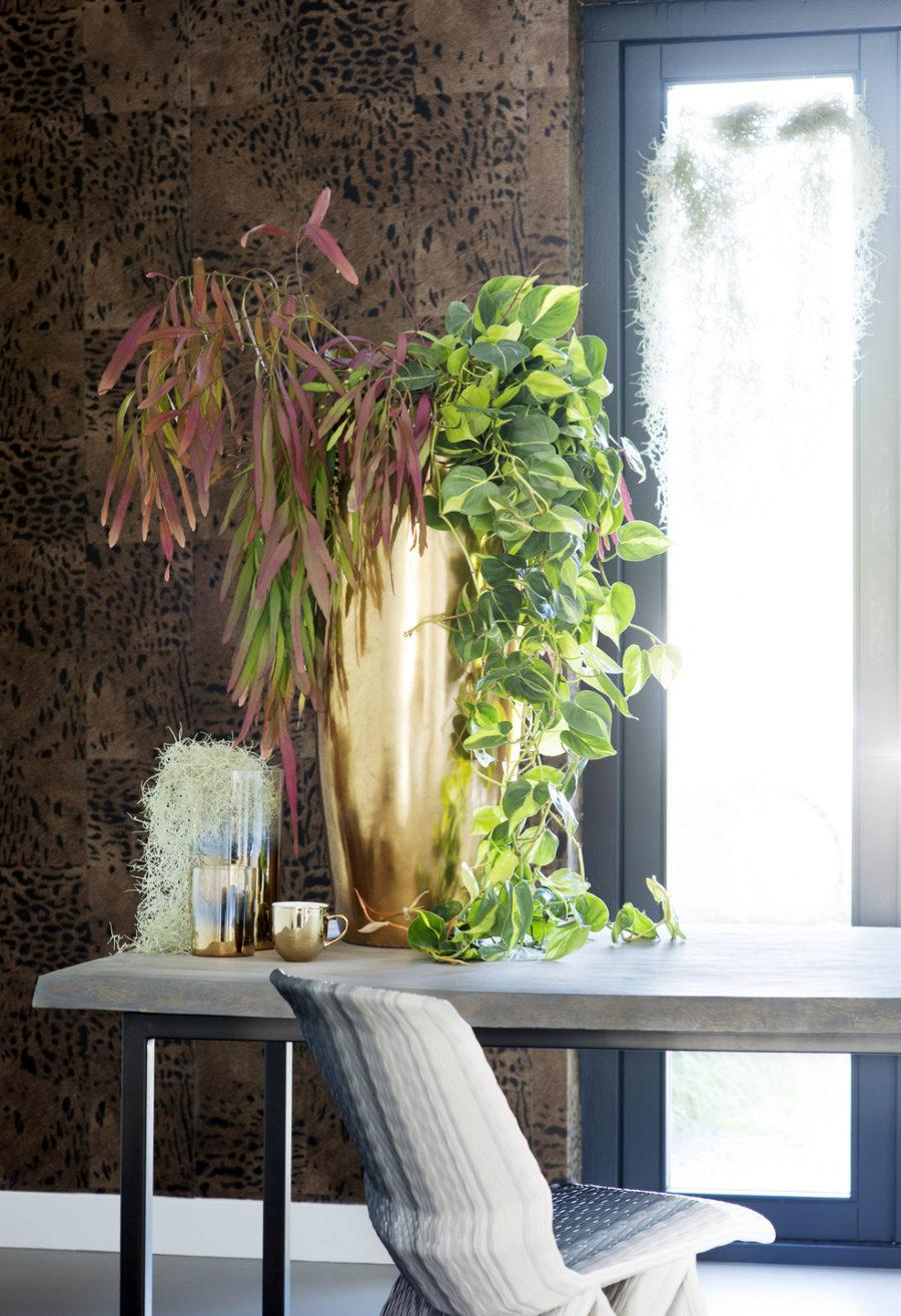 Неожиданное место для растения
