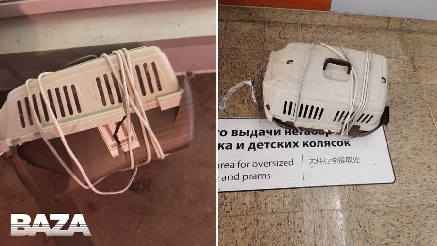 Два кота погибли на борту самолёта «Аэрофлота» во время перелёта из Нью-Йорка в Москву
