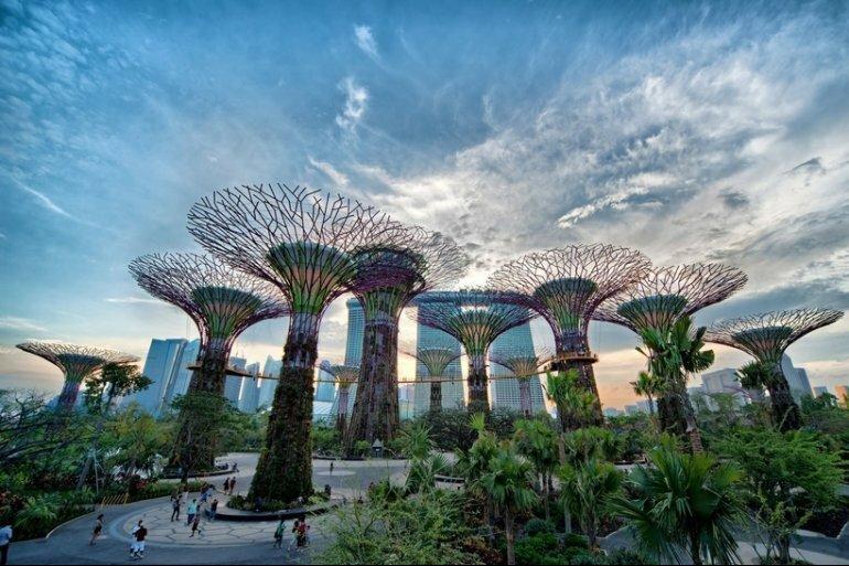 Деревья, на которых растут деревья - необычный парк в Сингапуре