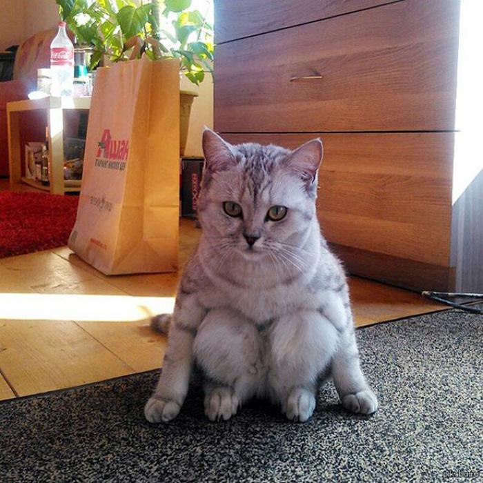 Кошка ведет себя очень странно!