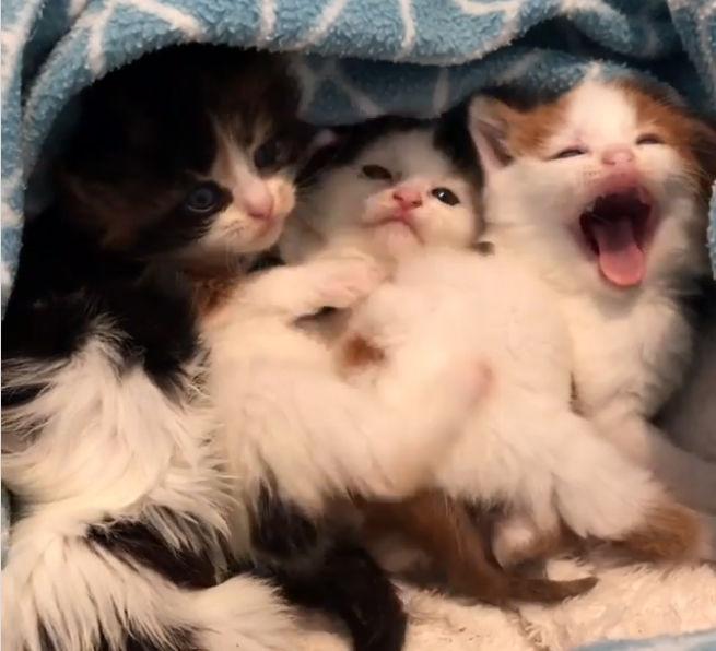 Меньше всего ожидаешь увидеть маленьких котят в мусорнике. Мужчина услышал плач и заглянул внутрь супер