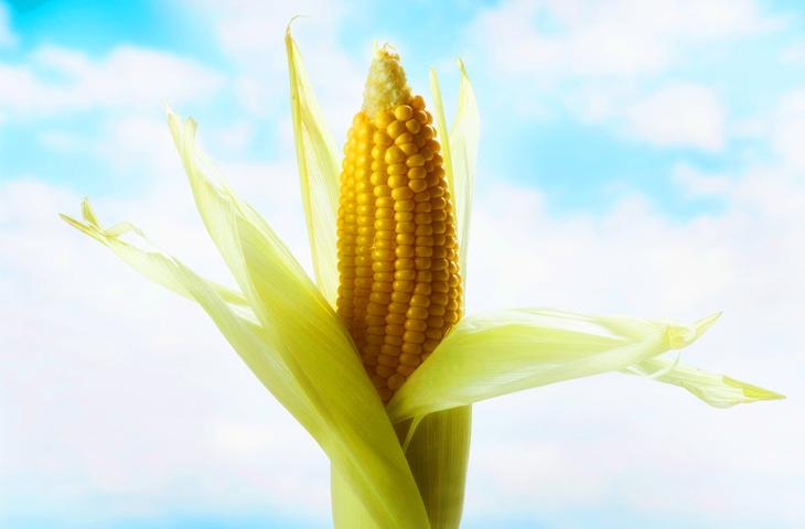 Десятка самых распространенных пищевых добавок