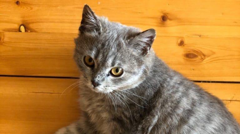 Парень узнал, что кошку в приюте усыпили | Мур ТВ | 429x768
