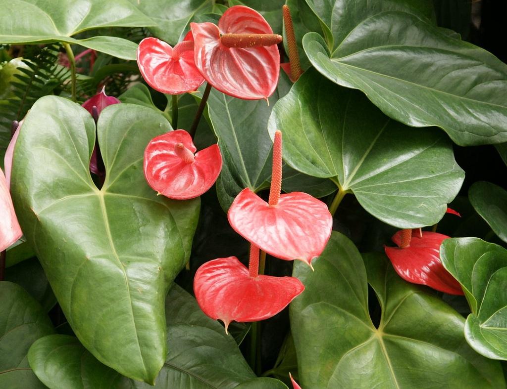 10 самых счастливых комнатных растений комнатные растения