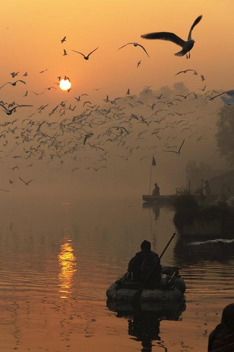 Индийский фотограф часто посещал реку, чтобы наблюдать за кружащими чайками и впечатляющими восходами.