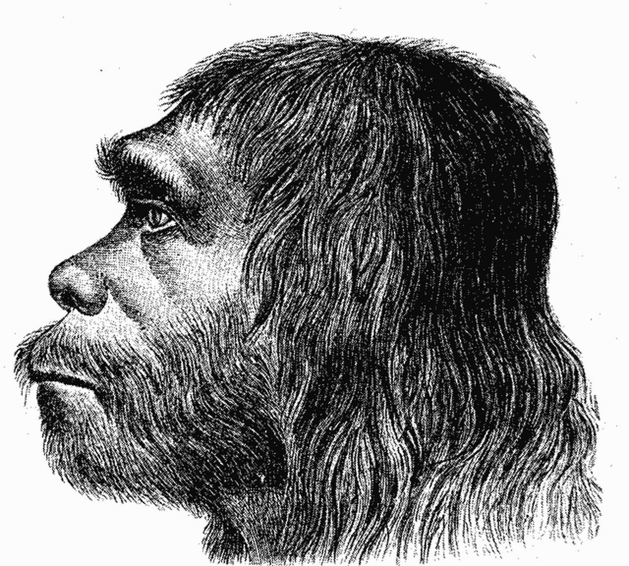 Ну, очень особая диета: 10 реальных примеров каннибализма среди людей история,наука