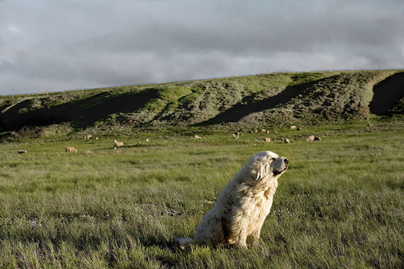 Чемп (9 лет) собаки, фото собак, фотографии животных