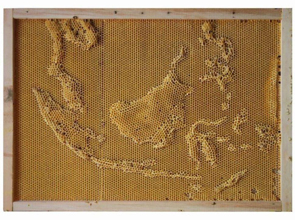 Индонезия и Малайзия  воск, карта, пчела, скульптура