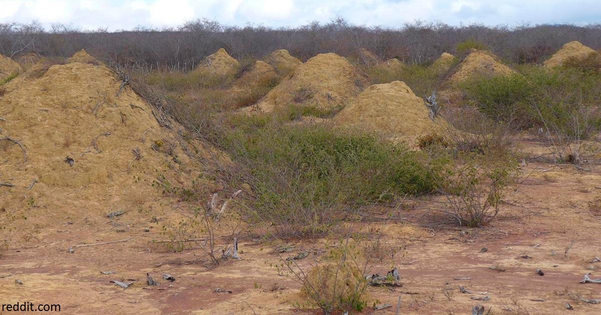 В Бразилии нашли термитник, которому 4000 лет и который по площади как Великобритания