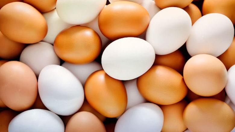 Картинки по запросу Яйца