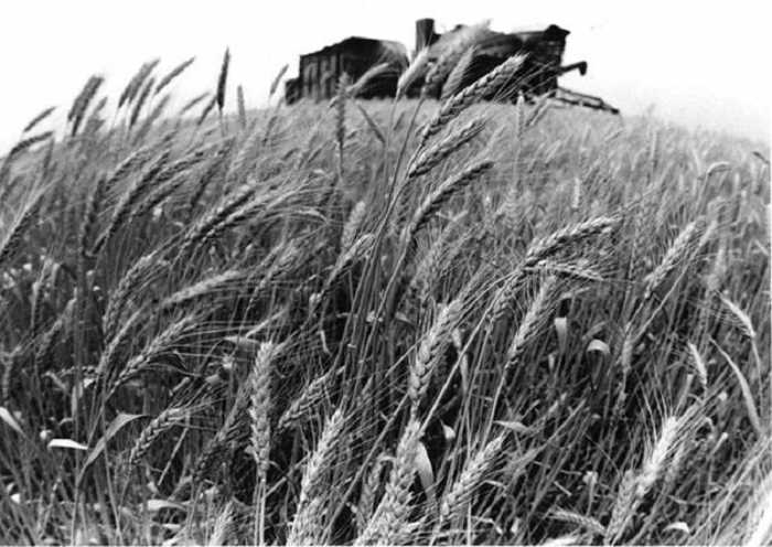 Богатый урожай, 1960-е годы.