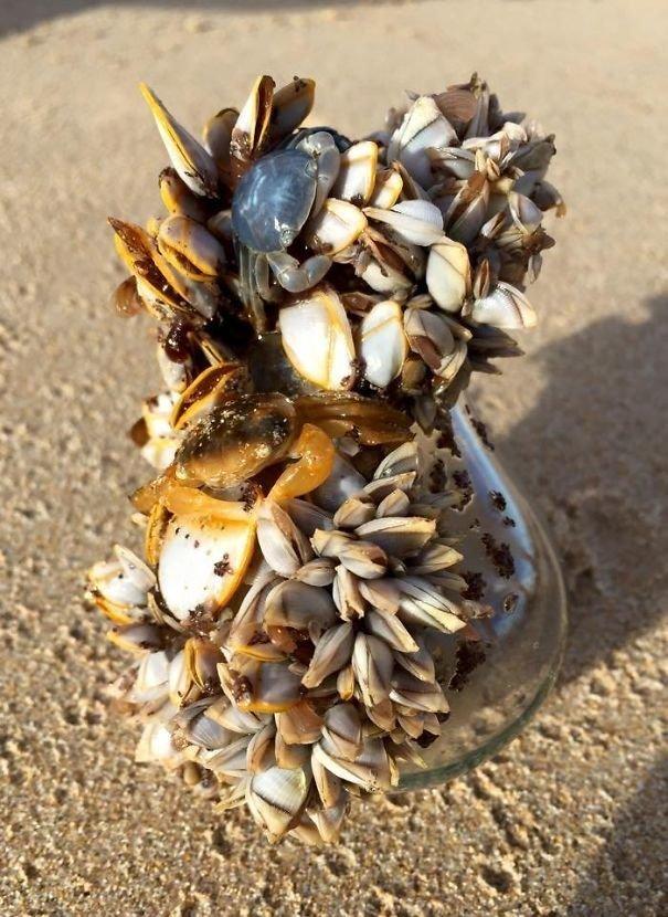 25. Лампочка, облепленная живыми ракушками, найдена на побережье Австралии Неожиданная находка, интересные вещи, интересные находки, находки, находки и открытия, не ждали, случайно