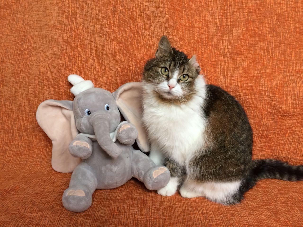 Ищу моего Человека на всю, всю долгую и счастливую кошачью жизнь!
