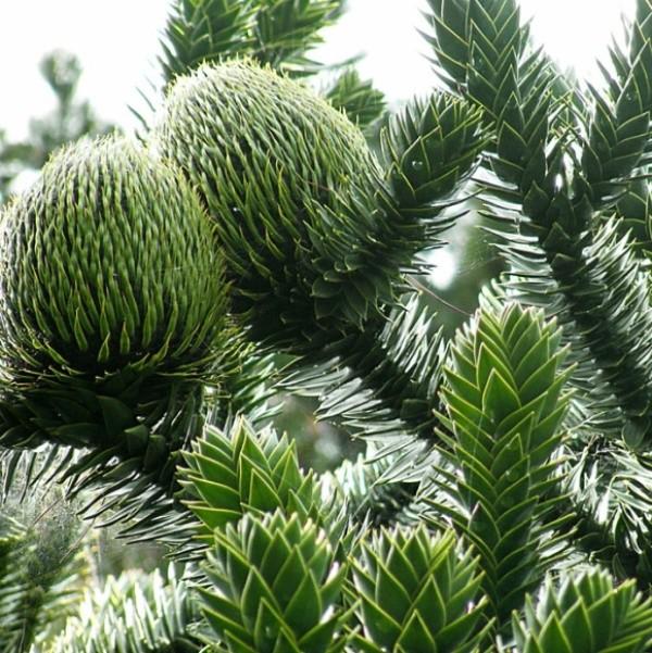 Árvores deslumbrantes do nosso planeta árvores, incrível, natureza, incrível, flora