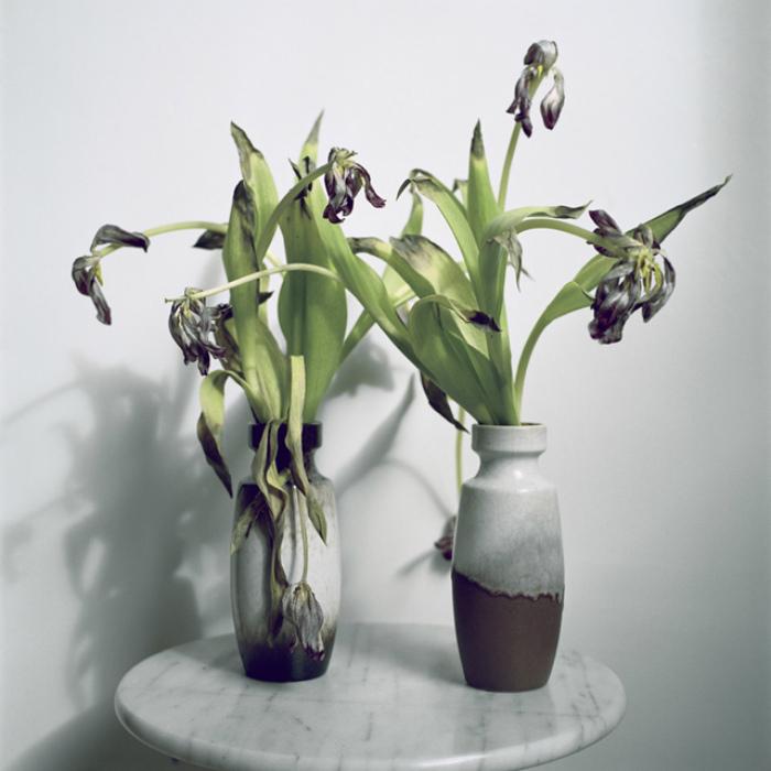 Мёртвые цветы.