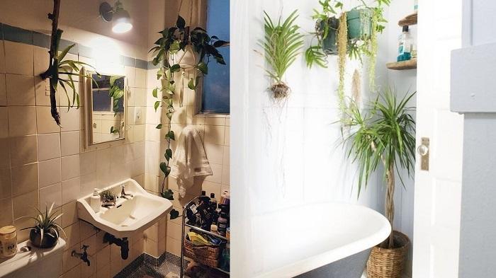 Этим 10 интерьерным растениям будет комфортно даже в ванной комнате без окна