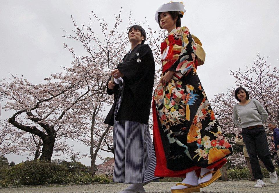 традиция любования цветущей сакурой-19