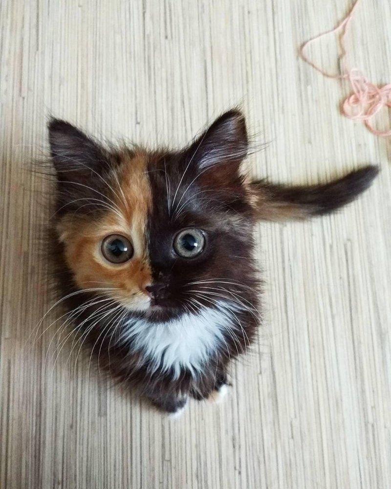 20 фото милейших котят, которые растопят сердце любого кот, котенок, кошка, милый