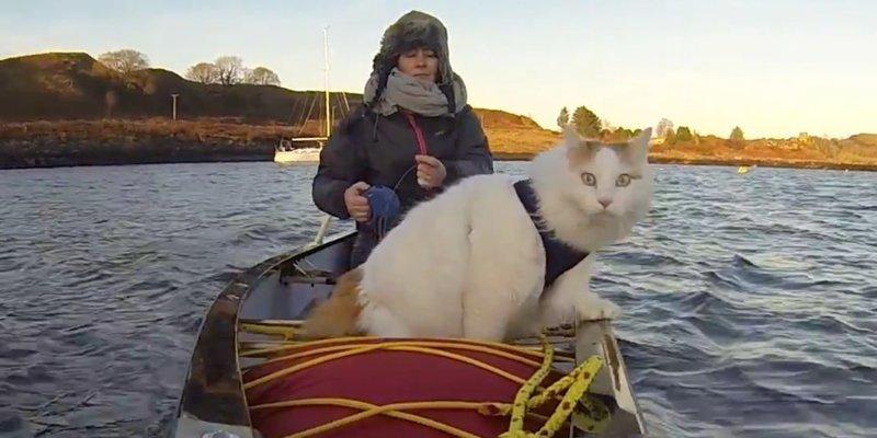 Жизнь под парусом: кот по кличке Солти, путешествующий на яхте
