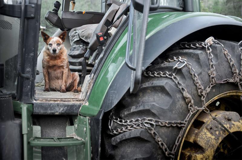 Джинджер (12 лет) собаки, фото собак, фотографии животных