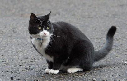 Ленивого кота-мышелова британского МИД посадили на диету