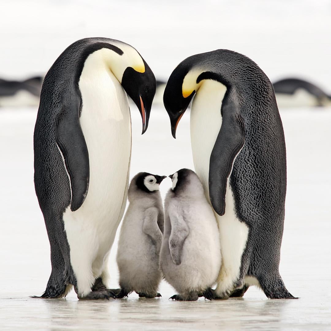 Прикольные картинки любовь животные, годовщине свадьбы