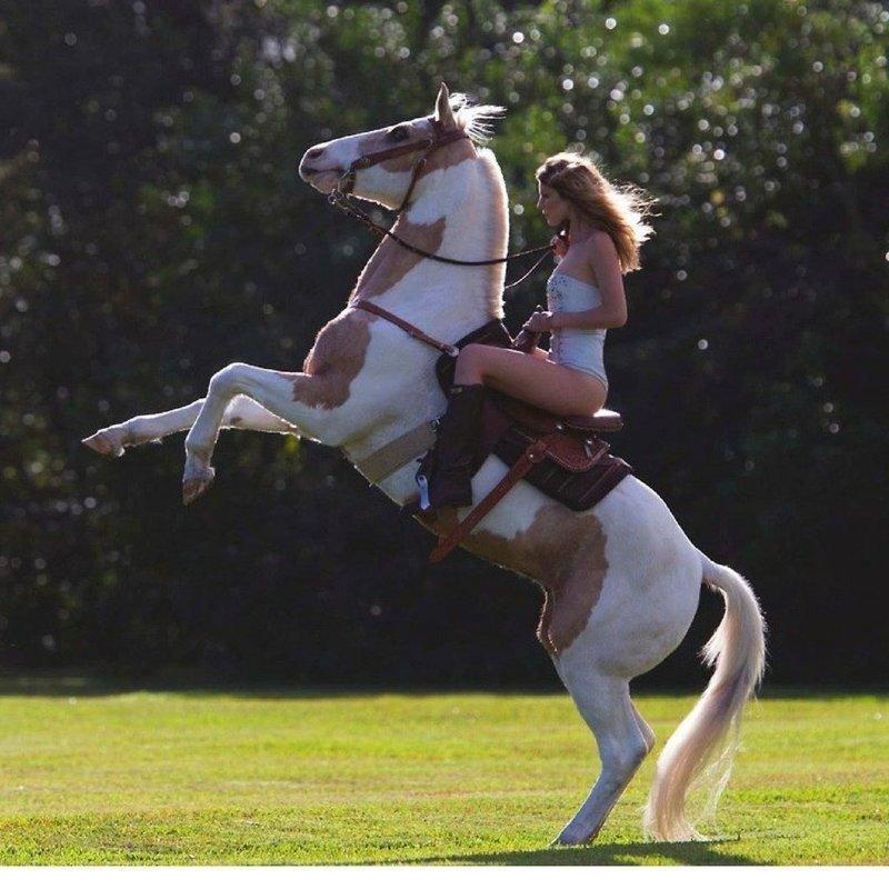 Девушки и лошади прекрасны и в движении, и в статике амазонки, красиво, лошади и девушки, наездницы