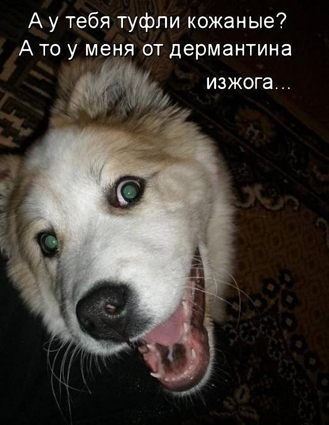 Смешные картинки щенков с надписями