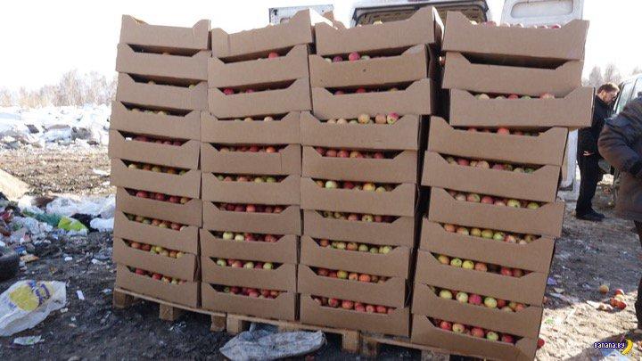 Показательное истребление яблок в Новосибирске