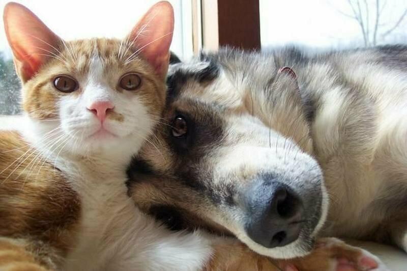 Картинки с приколами собаками и котами, картинки