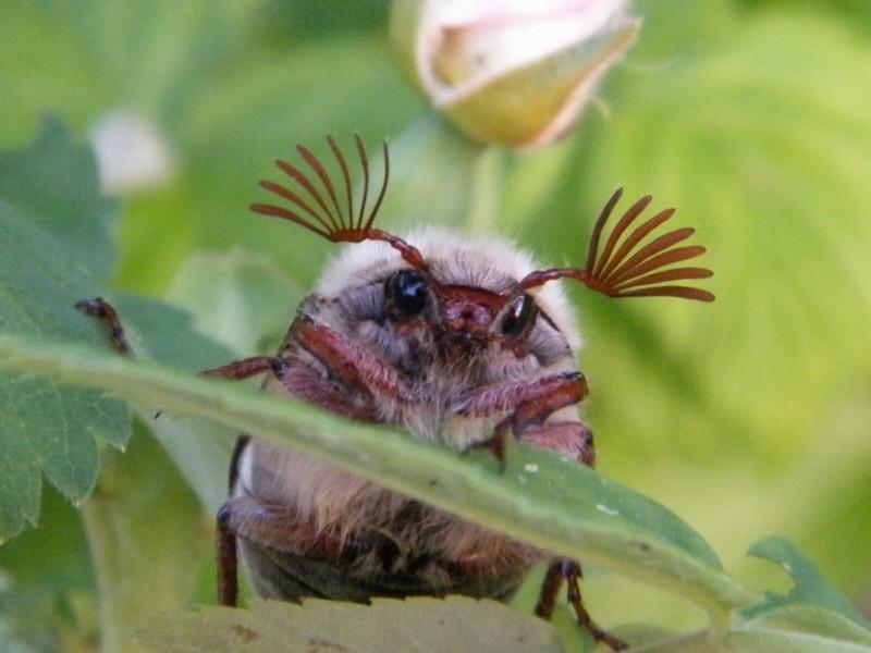 Смешные картинки насекомое, февраля