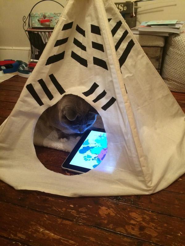 25 испорченных кошек, живущи…