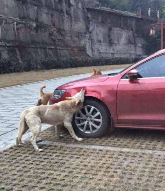 Машину покусали собаки